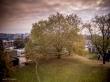 arbre remarquable brugmann.jpg